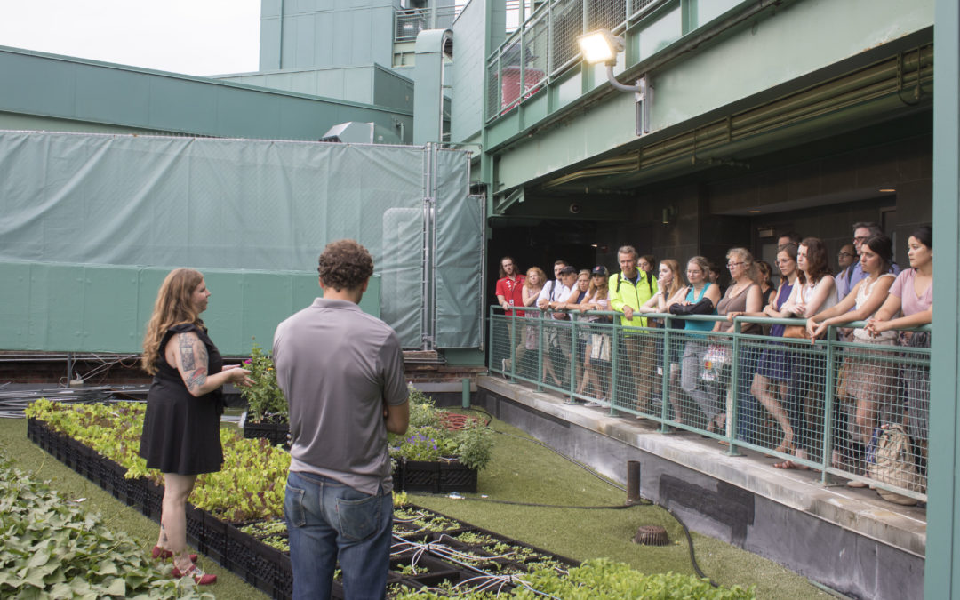Baseball and Rooftop Farms: A Tour of Fenway Park